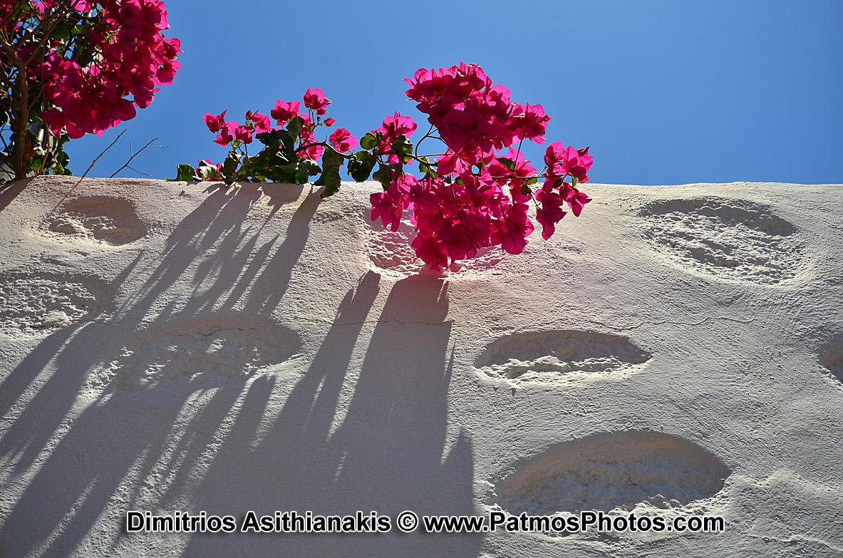 Patmos Flowers Photos